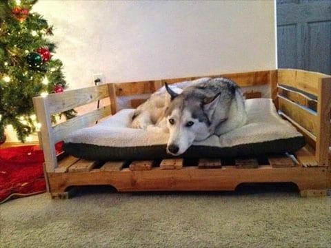 camas para perros con palets faciles
