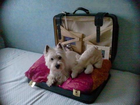 camas para perros recicladas con maleta