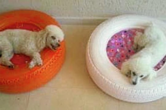 Como hacer camitas o camas para perros recicladas - Como hacer una cama para perro ...
