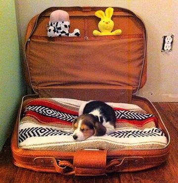 camas para perros caseras sencillas