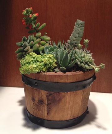 arreglos de cactus en macetas decorativos