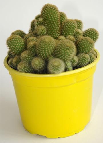 arreglos de cactus en macetas pequeñas