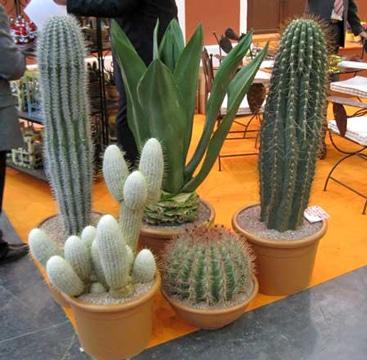 arreglos de cactus en macetas sencillos