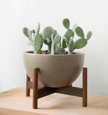 cactus de colores naturales decorativos