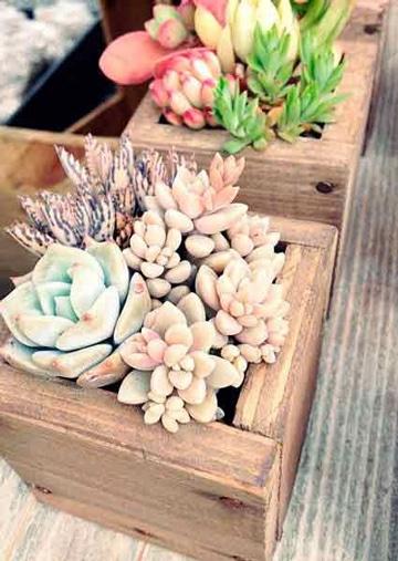 como cuidar cactus en maceta de madera