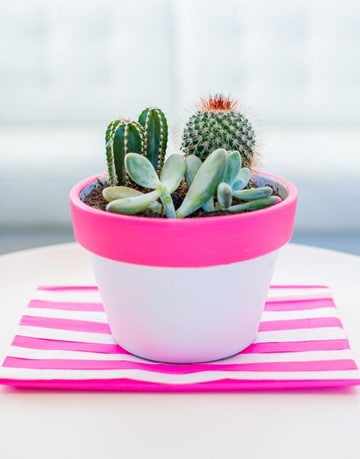 como cuidar cactus en maceta ideas faciles