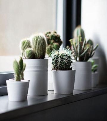 como cuidar cactus en maceta pequeña