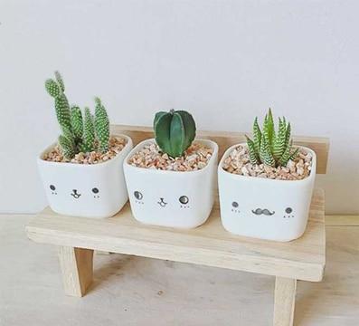 como cuidar cactus en maceta trucos