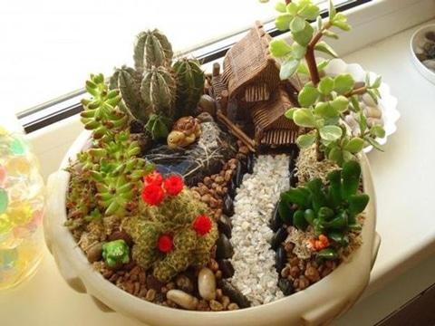 imagenes de cactus con flores decorativos