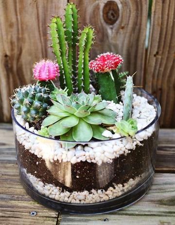 imagenes de cactus con flores pequeños