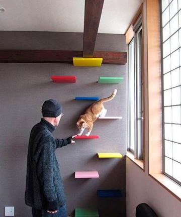 juegos caseros para gatos en pared