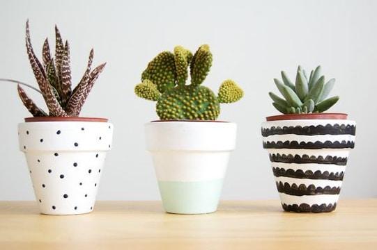 macetas para cactus pequeños decoradas