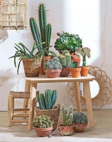 macetas para cactus pequeños y grandes