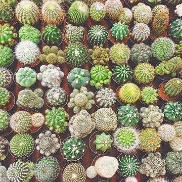 como hacer cactus de colores en venta