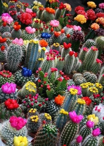 como hacer cactus de colores injertos