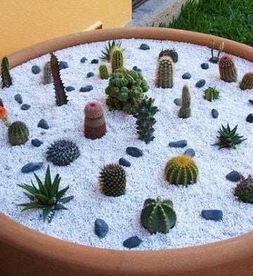 como hacer cactus de colores para decoracion