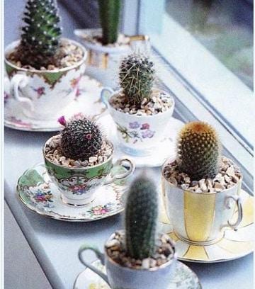 cuidados de un cactus mini diferentes tipos