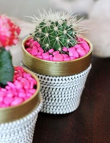cuidados de un cactus mini en maceta