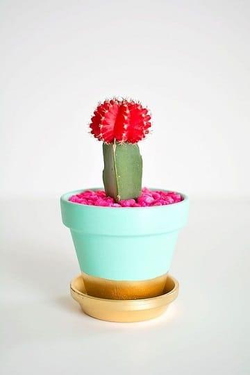 cuidados de un cactus mini originales