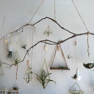 ramas de arboles para decorar paredes con plantas