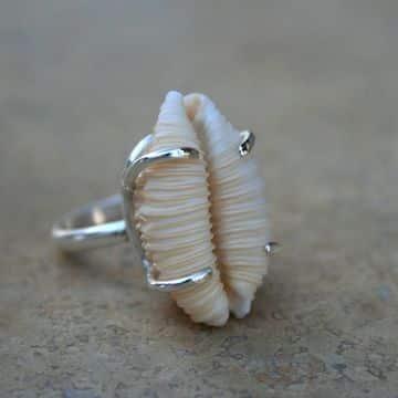 anillos con conchas de mar con plata