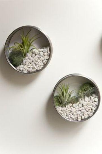 latas de atun decoradas de mini jardinera