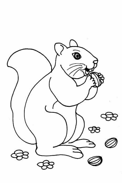 animales terrestres para dibujar e imprimir
