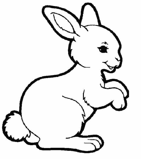 animales terrestres para dibujar faciles