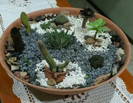 como hacer un terrario de cactus en maceta