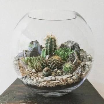 como hacer un terrario de cactus en pecera