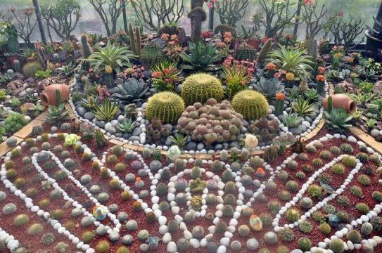 decoracion de cactus con piedras exterior