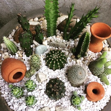 ideas de como hacer un terrario de cactus