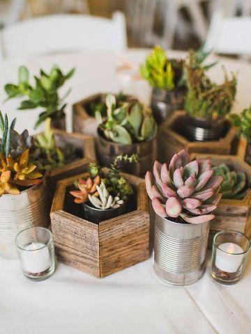 plantas para centros de mesa de sala