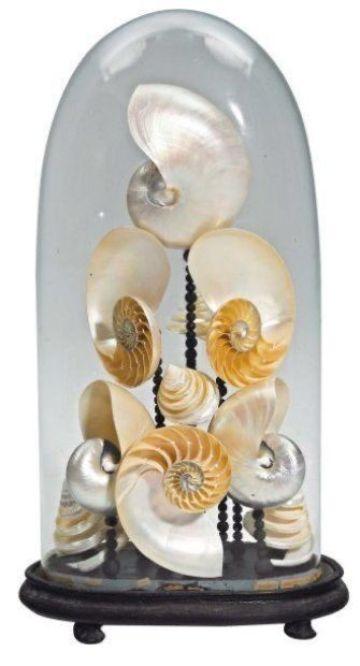 adornos con caracoles de mar en vidrio