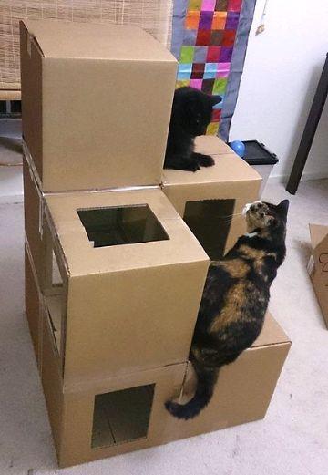 juguetes para gatos caseros con cajas