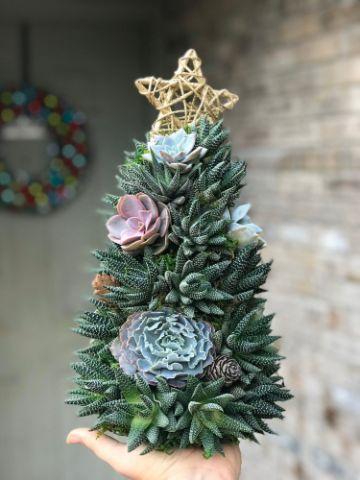 arboles de navidad con suculentas simples